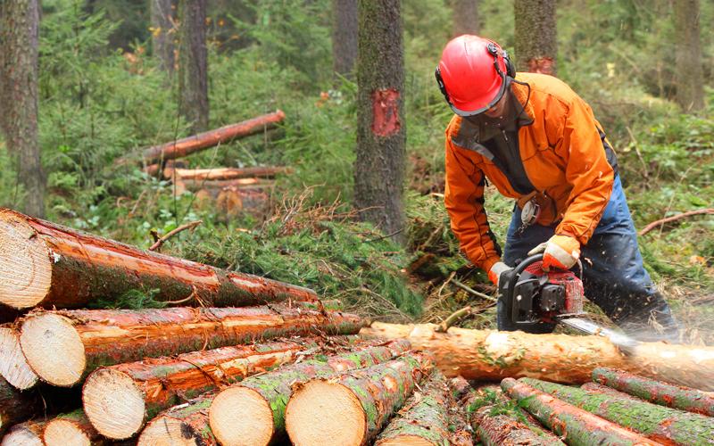 Чому краще купувати деревину на сайті УУБ