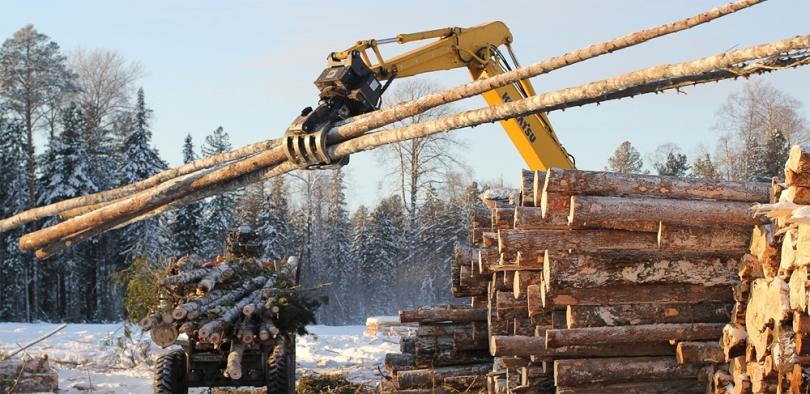 Відкрита система торгів деревиною